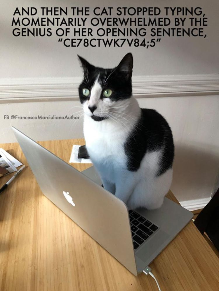 Keep Up The Good Work Cats Funny Cat Memes Cat Love