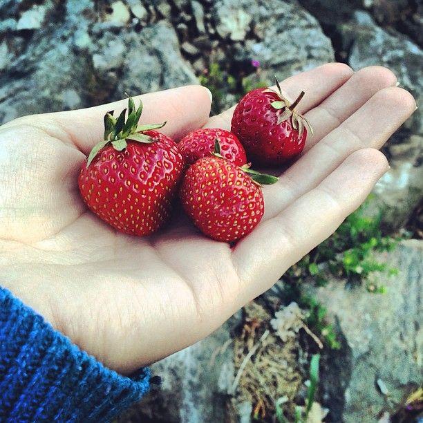 Norwegian strawberries.