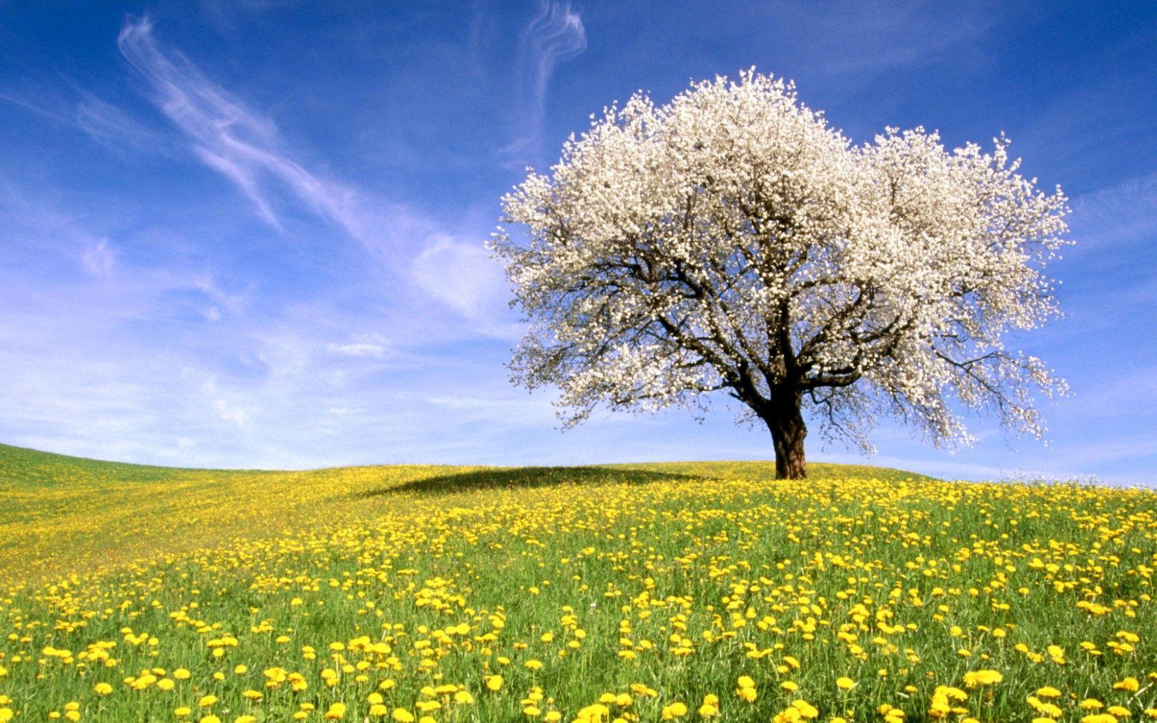 imagenes de la primavera para tu fondo de pantalla