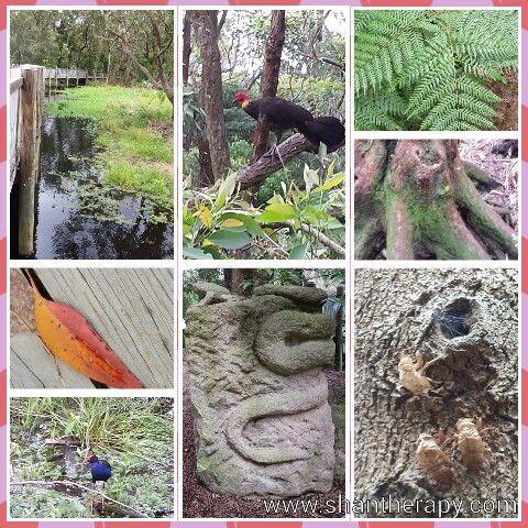 Warriewood Wetlands Wildlife Preservation Area - Sydney