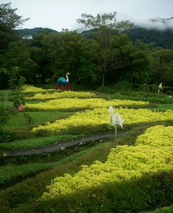 Mi jardin es tu jardin boquete panam paisajismo jardines pinterest panam paisajismo - Jardines y paisajismo ...