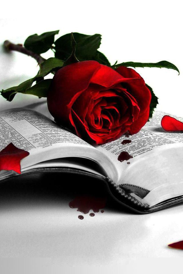 Red Rose On Book Black And White Books Red Roses Rose Wallpaper