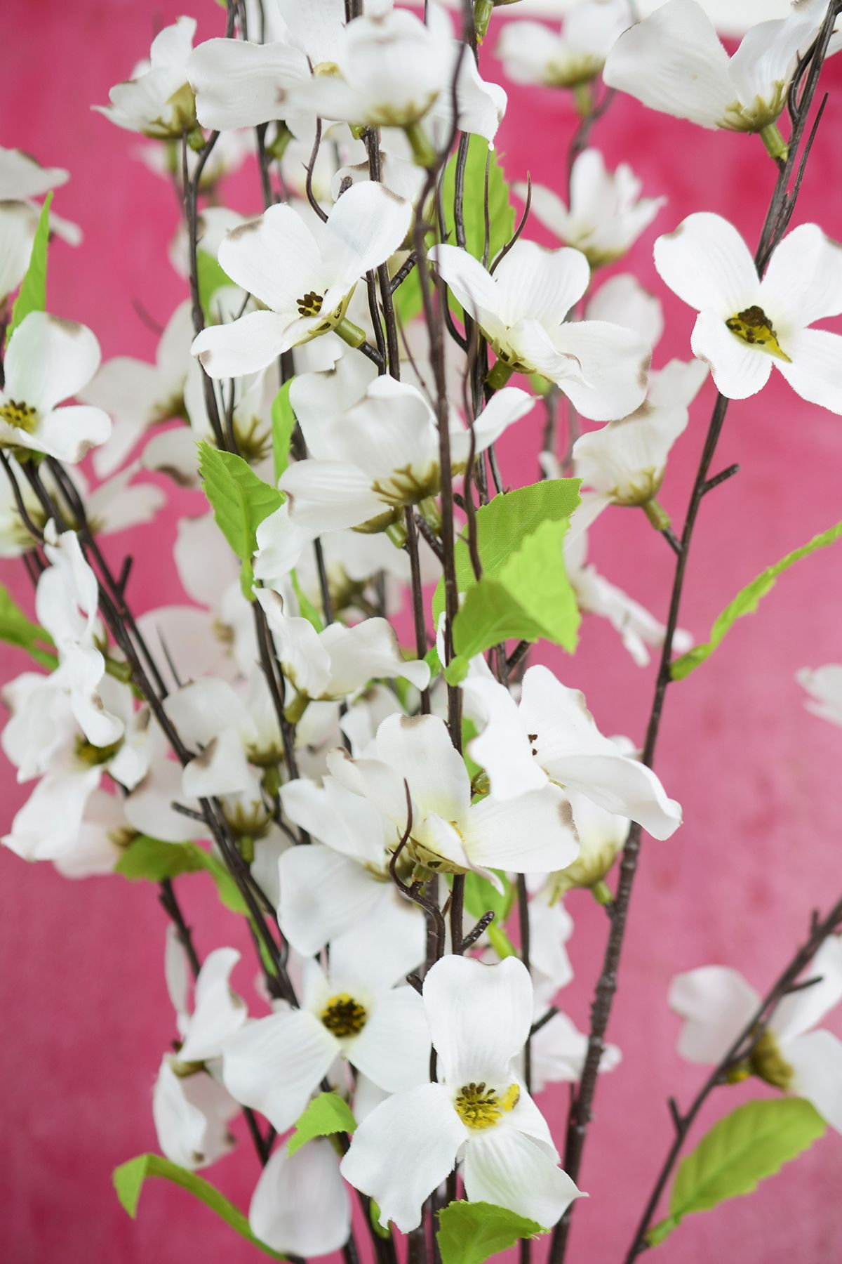 Dogwood branches diy and useful idea tips pinterest dogwood branches mightylinksfo