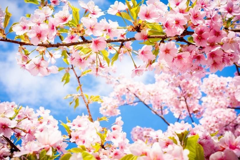 Spring Wallpaper Download Free High Resolution Wallpapers For