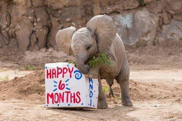 彼女を制御することはありません。この赤ちゃんは興奮を。   21 Baby Elephants Who Are The Life Of The Party