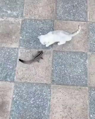 Cat tamer, super chipmunk