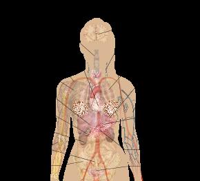 Human body diagrams wikimedia commons farm design resources human body diagrams wikimedia commons ccuart Gallery