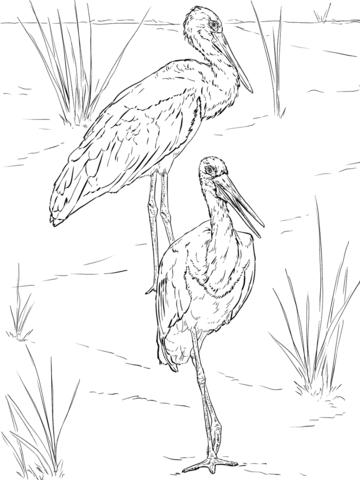 Pareja de Cigüeñas Negras Dibujo para colorear | pájaros y aves ...
