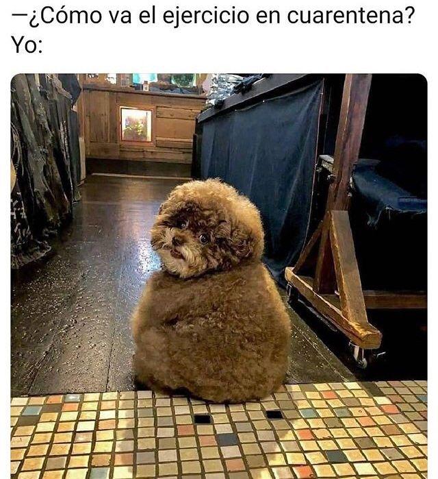 Pin De Ale En Memes Memes Perros Perros Graciosos Animales Adorables