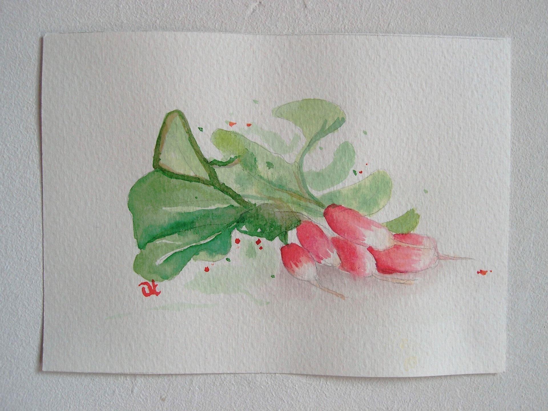 """Aquarelle """" R me radis"""" série alphabet format carte postale"""
