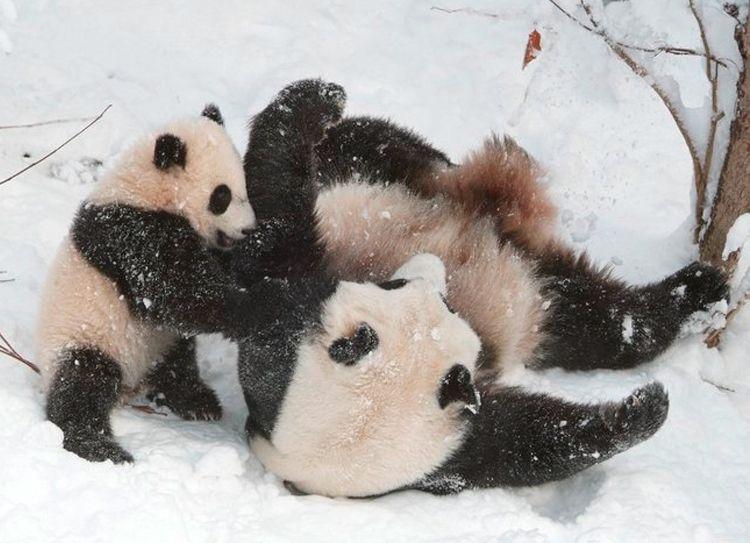 como  se  divierten   en  la  nieve  son  como  niños