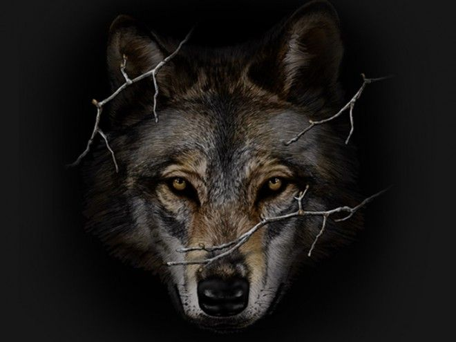 Wolf Face on Black. 100% Cotton T-shirt #tee #wolves #cool #nature #graphic #art #artwork