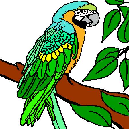 Coloriage perroquet a imprimer oiseaux pinterest - Dessins de perroquets ...