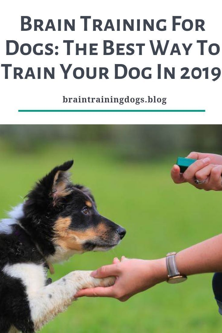 Are You A Good Dogowner Do You Know How To Train Your Dog Or