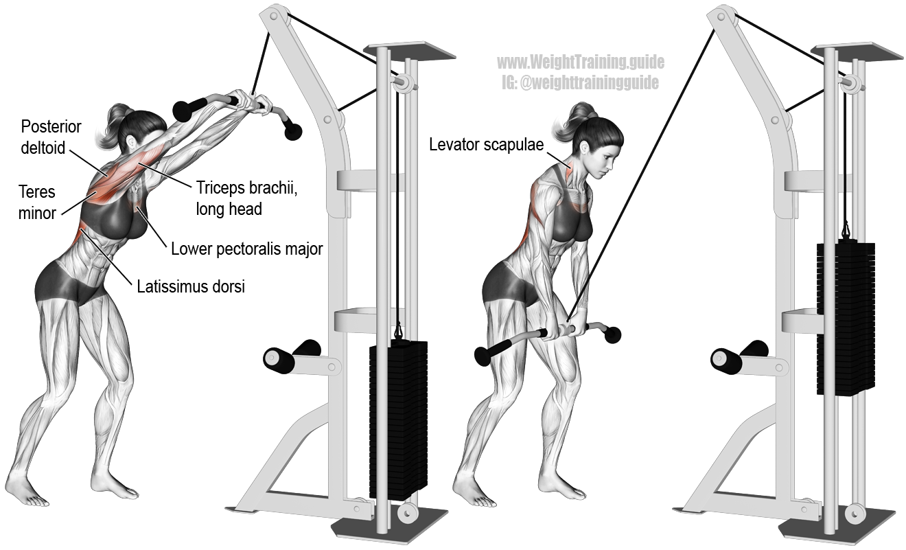 Cable straight-arm pull-down exercise instructions and video   Back