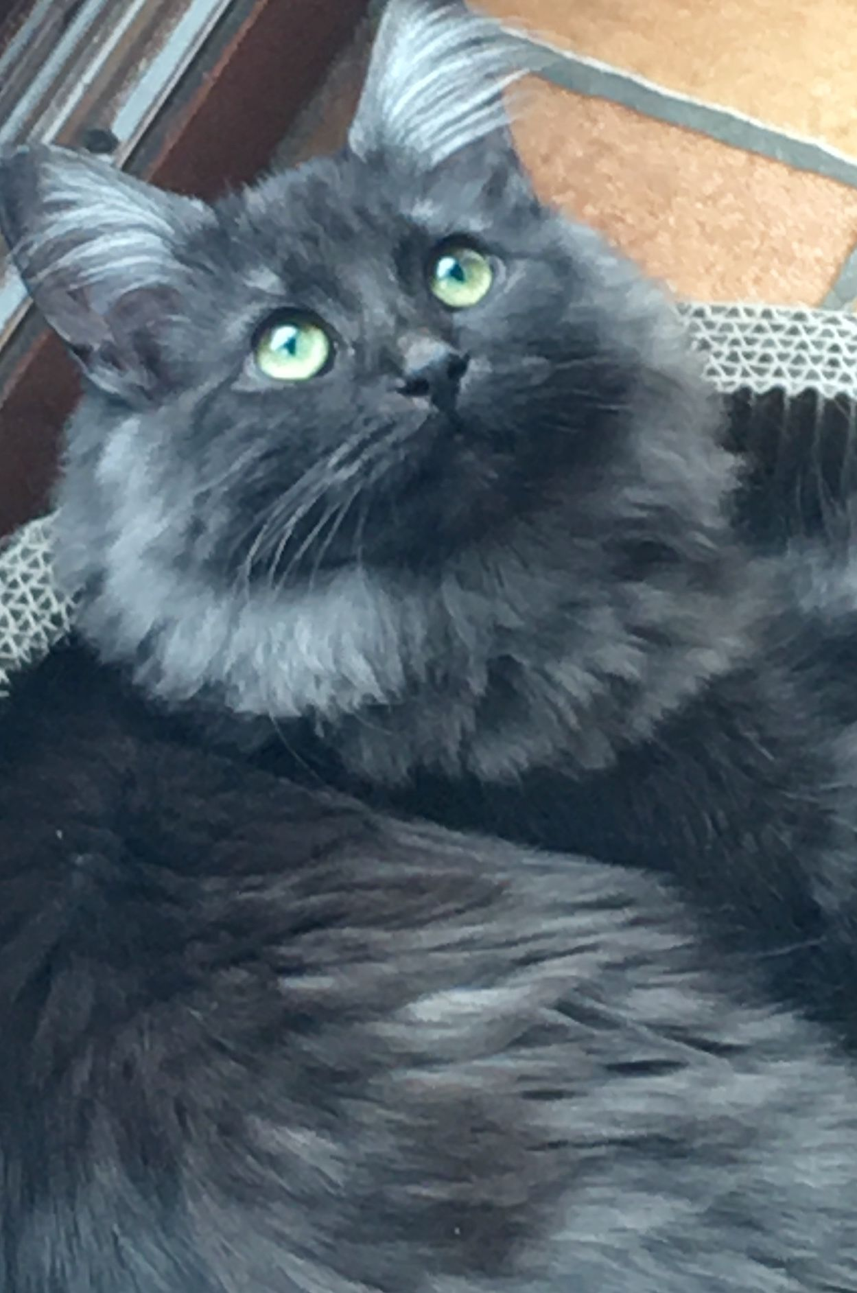 Harriet is an exceptionally beautiful green eyed, black
