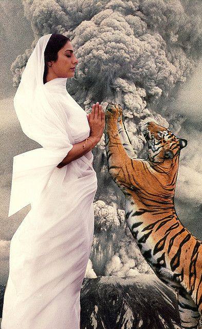 Lady and the Tiger by David Adams