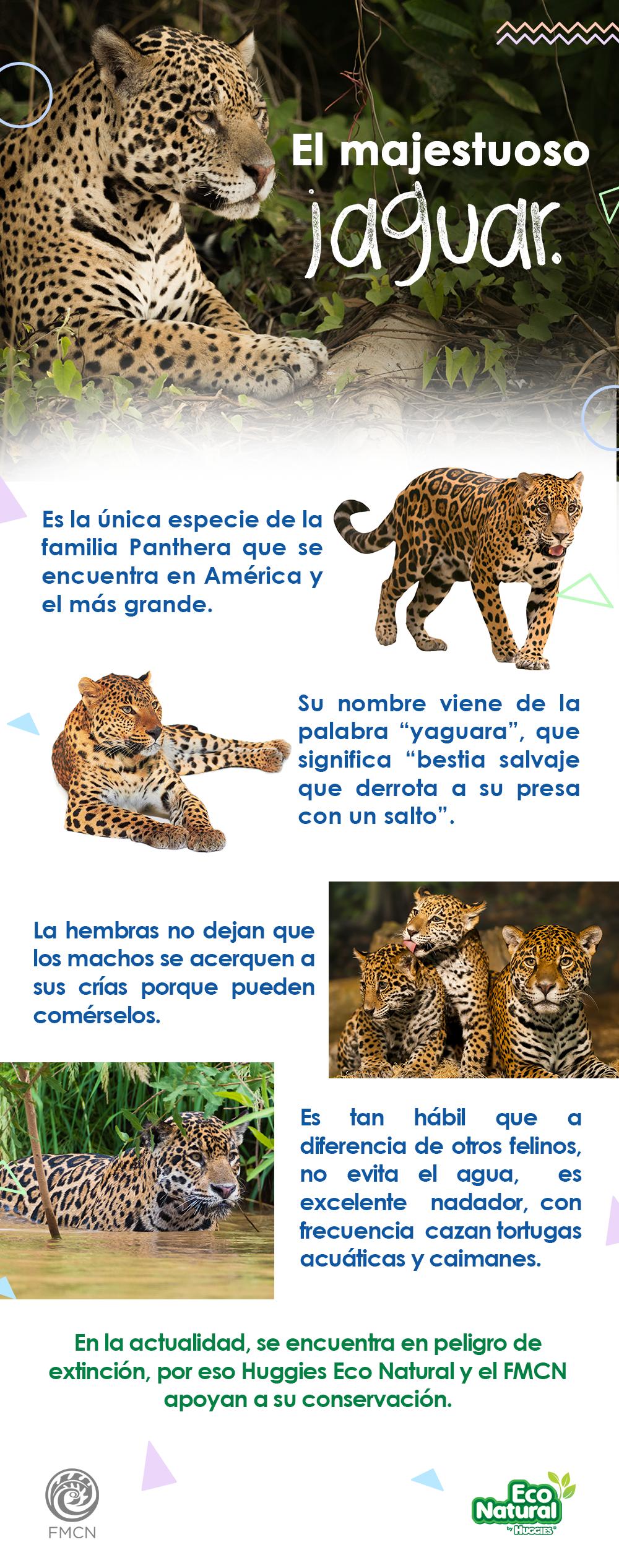 El Jaguar Es Un Gran Felino Que Por Sus Hermosas Características Está En Peligro De Extinción Por Jaguar Conservacion De La Naturaleza En Peligro De Extincion