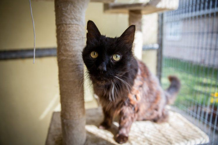 Dumped Cat Turned Out To Be A Possible Record Breaker Old Cats Cats Old Things