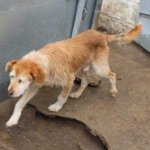 Lucky Pfotenhilfe Portugal Hunde In Not Tiere Suchen Ein Zuhause Tiere