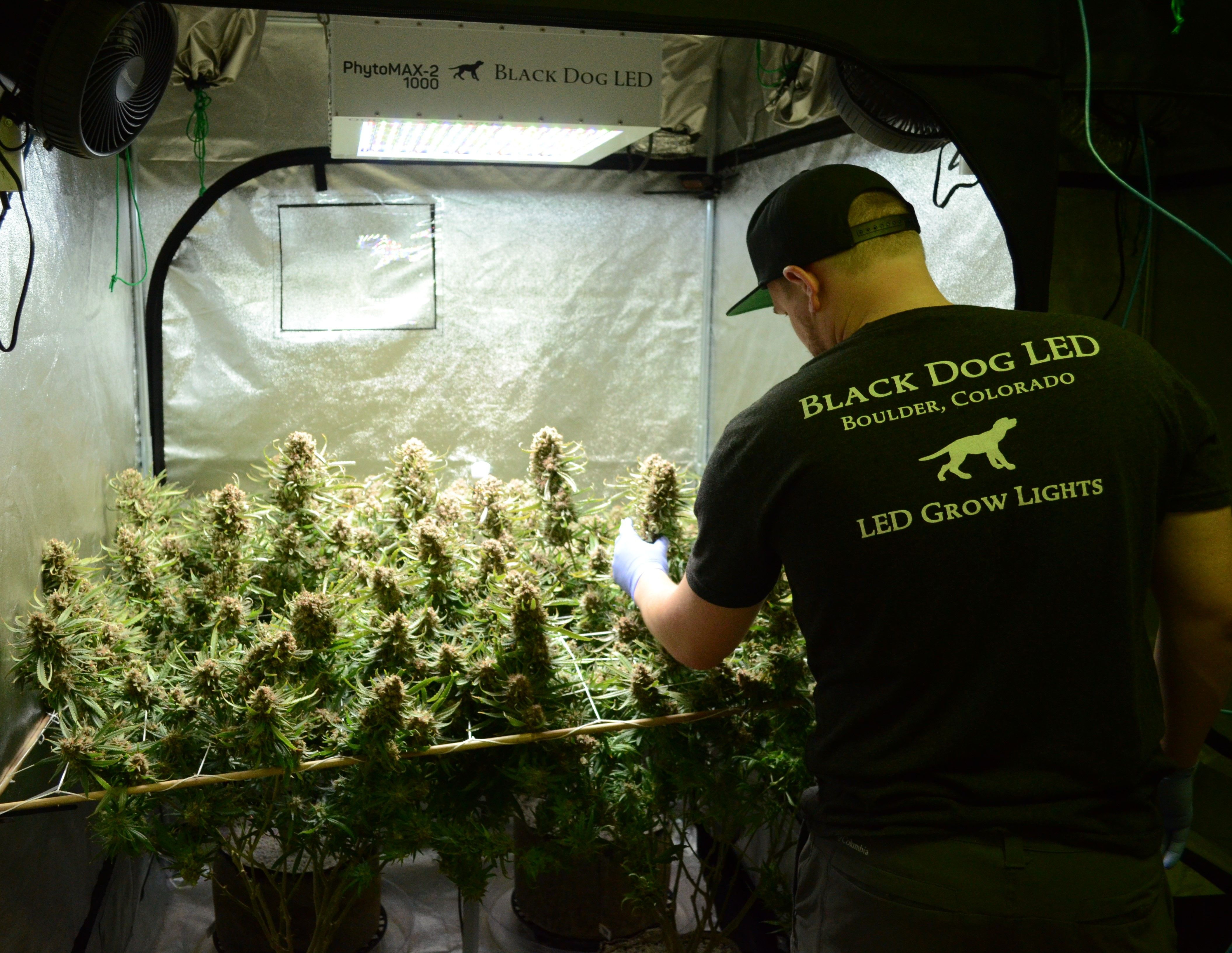 Get your 4x4 Grow kit from BlackDogLED and MAXimize your garden