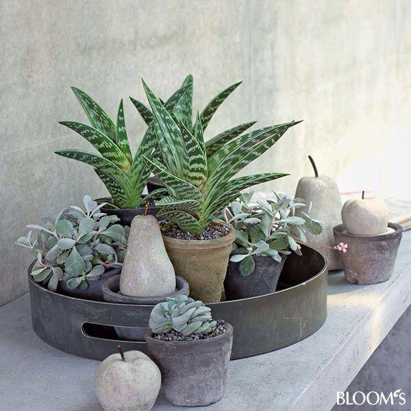Pflanzen, Wohnen Und Deko