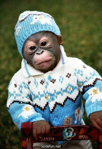 4d7520d67 Baby Chimpanzee dressed up for Winter
