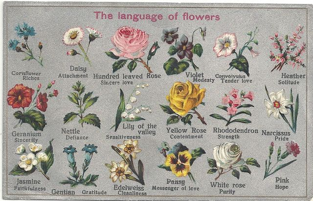 The Language Of Flowers By R Hamdan Via Flickr Victorian Chart On The Meaning Of Flowers Language Of Flowers Flower Meanings Spring Wedding Flowers