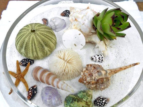 diy terrarium kit beach and succulent dish garden