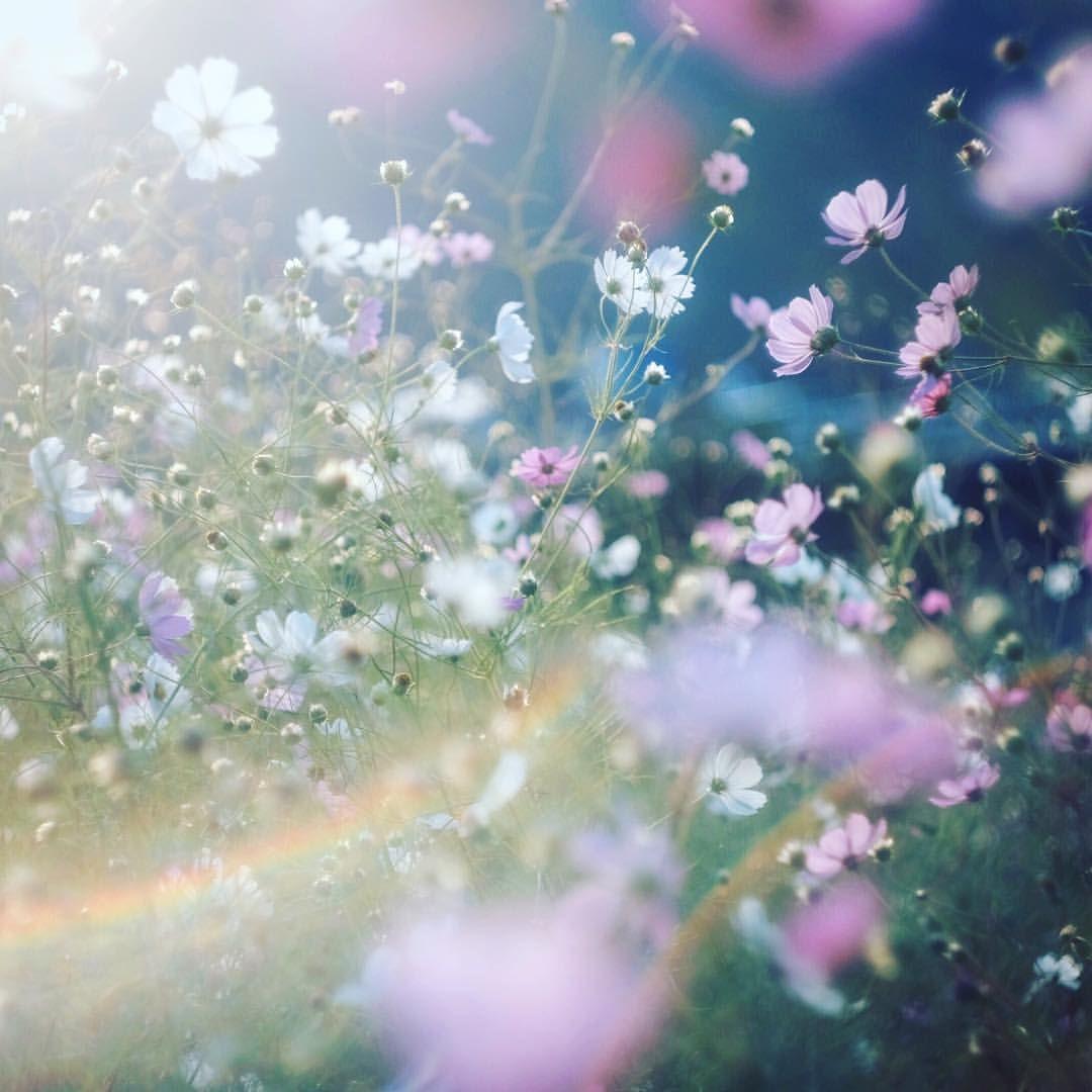 風景 のアイデア 投稿者 ٩ ๑ ۶ さん 2020 花
