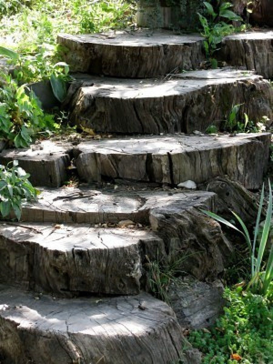 Tree stump steps backyard ideas pinterest tree stump for Tree trunk slice ideas