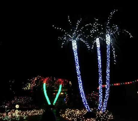 christmas lights miami # 34