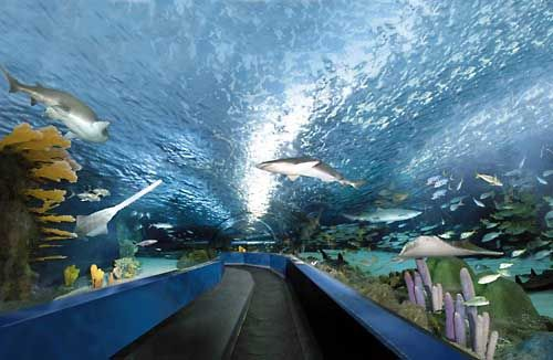 This super-awesome-cool water tunnel infested with sharks ...
