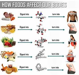 The healthy boy junk food vs also diet and exercise rh pinterest