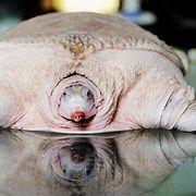 Ugly Albino Animals #albinoanimals