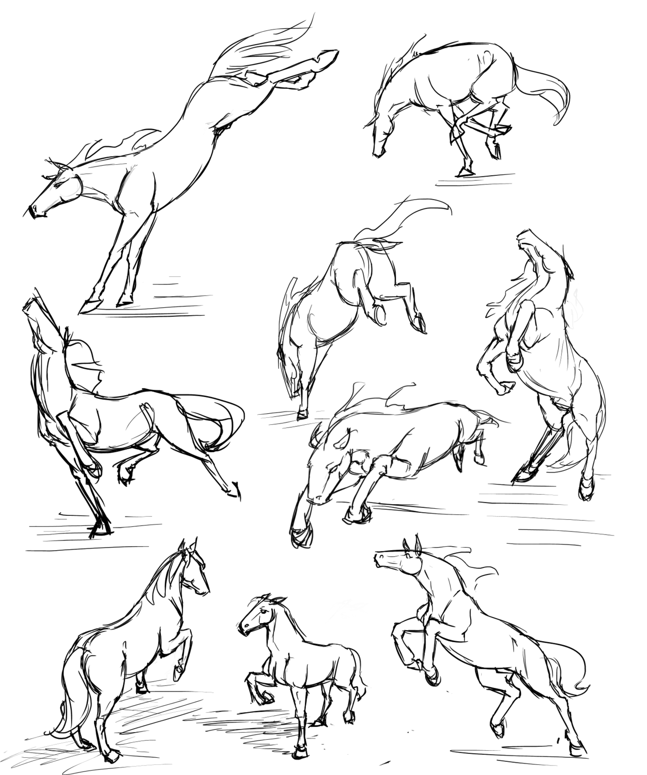 Pin by Cloudy Wolf on Horse Anatomy | Pinterest | Animal drawings ...