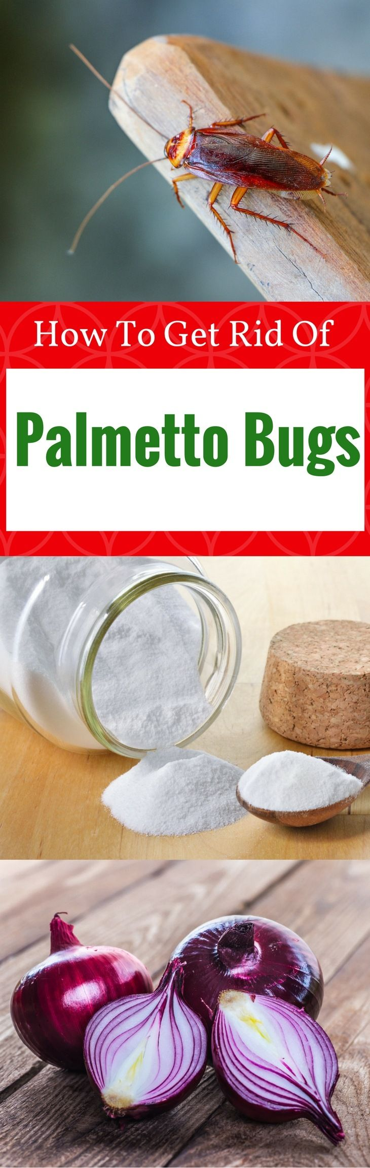How to get rid of palmetto bugs naturally 10 best ways in