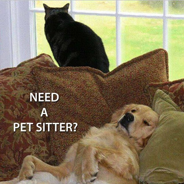 Find a pet sitter for your pets at Petsodia! Sign up now at www.petsodia.com to create your profile & connect with pet sitters all around Malaysia!