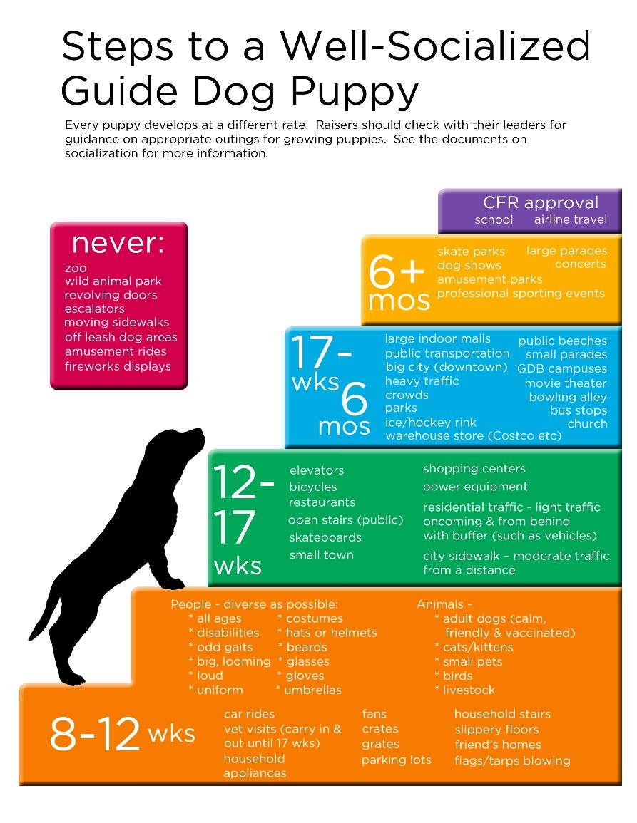 Pin By Deidre Morris On Puppy Time Puppy Socialization Dog