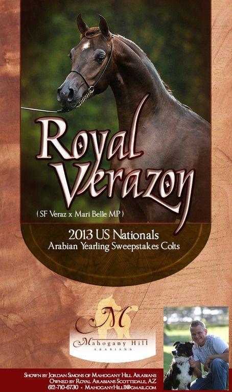 Jordan Simons Presents ... :: Arabian Horses, Stallions, Farms, Arabians, for sale - Arabian Horse Network, www.arabhorse.com