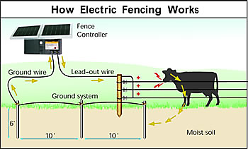 How Electric Fencing Works Zareba Systems Teknologi Kesehatan