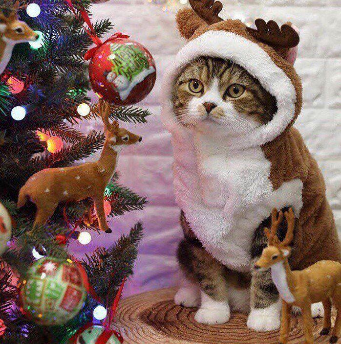 Прикольные фото с рождеством