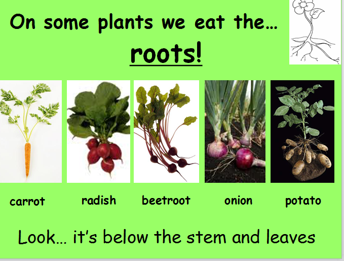 A Powerpoint About The Parts Of Plants We Eat Click Here Plants Powerpoint 2 Lesson Plan And Worksheets Link Here Plan Parts Of A Plant Plants Plant Lessons