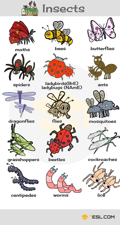 animals name list in english pdf