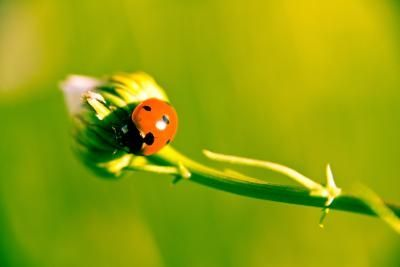 How to Get Rid of Ladybugs in a House With Lemons   DIY
