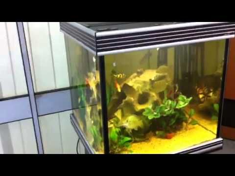 Cloudy Water Problems In The Noble Cichlid Aquarium Cichlid Aquarium Cichlids Aquarium