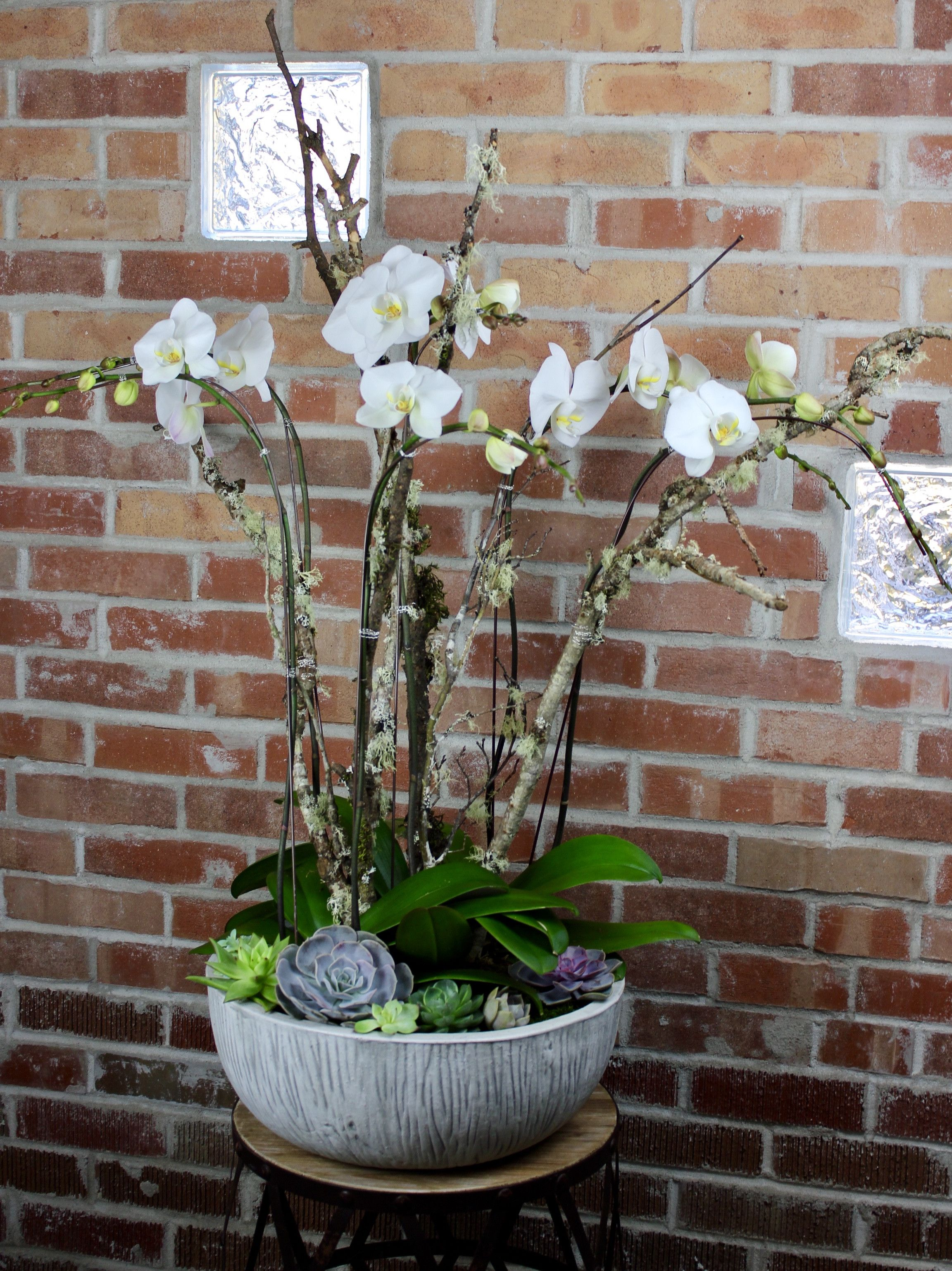 So Fresh, and So Green... Orchid and Succulent Garden