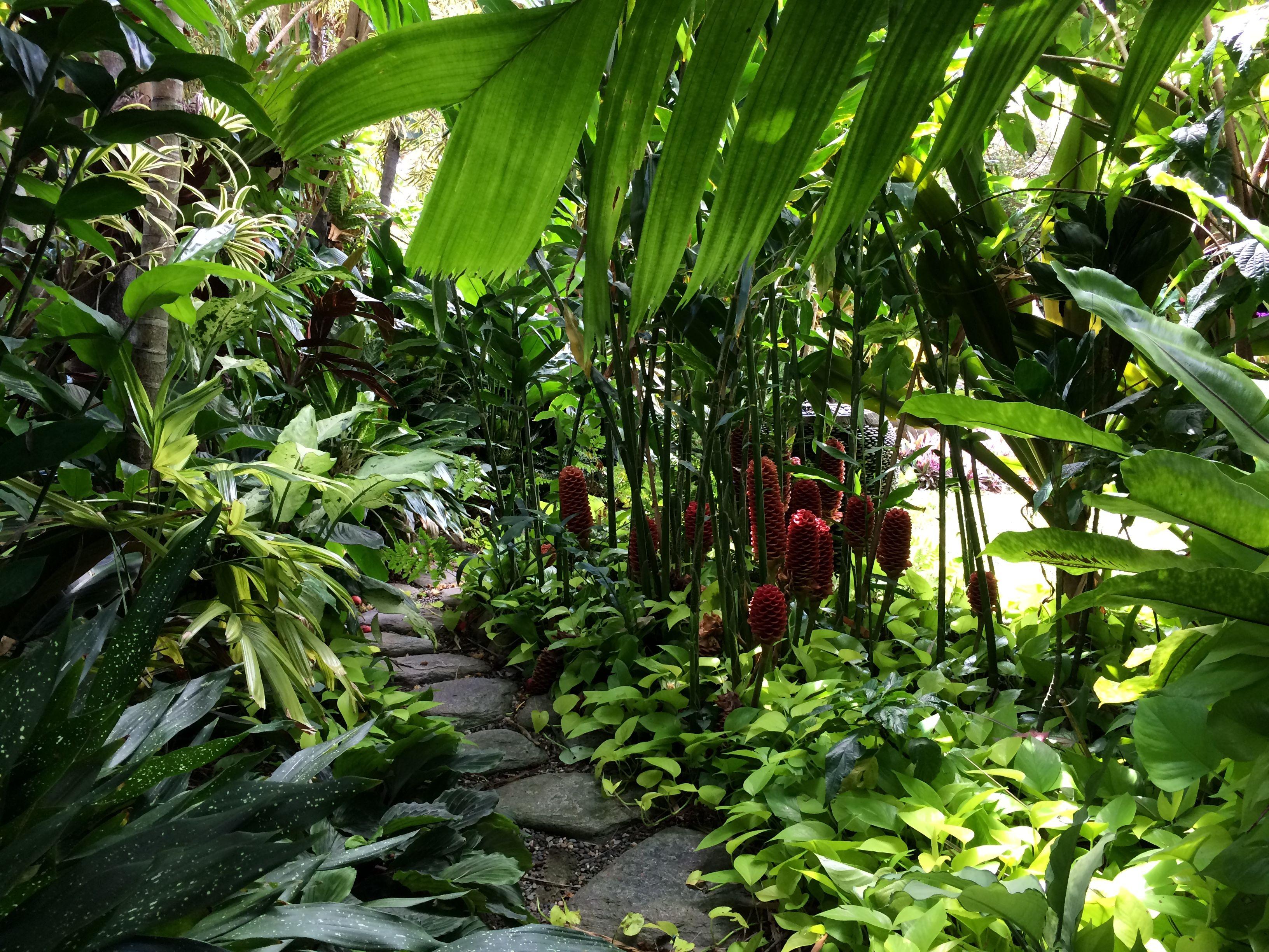 Tropical Garden Path Beehive Gingers Aspidistra Pothos