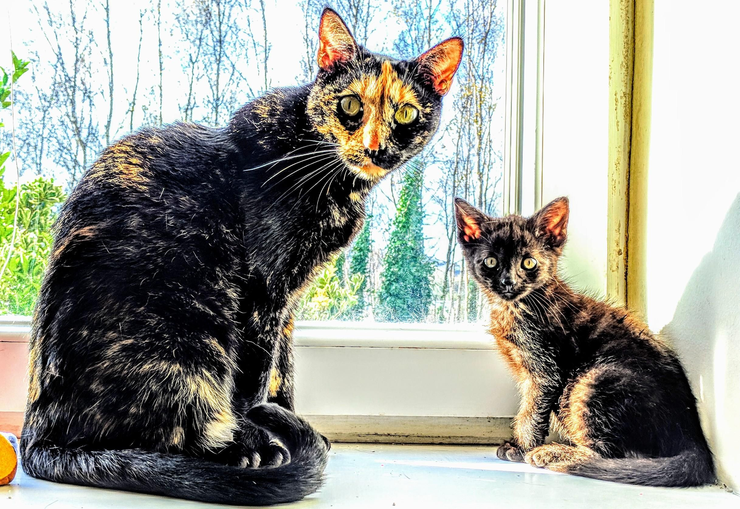 Big and little trouble enjoying the sun cats funny pictures funny