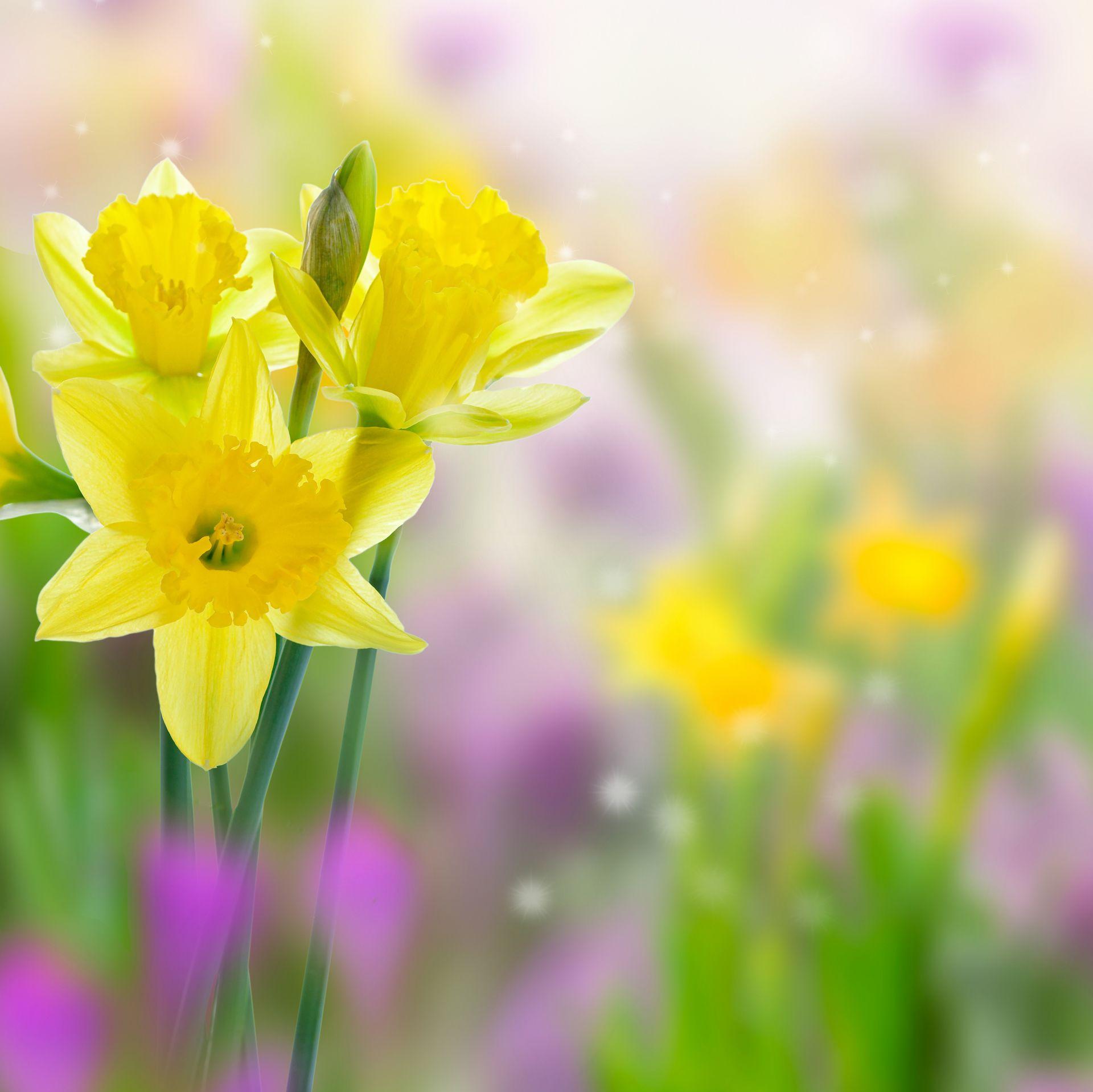 Cool Spring Wallpapers: Free Spring Desktop Wallpaper